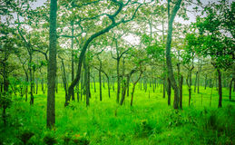 Trees in meadow. A lot of trees in the green meadow Stock Images