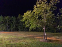 Trees in meadow at night. Trees in grassy meadow against night skies Royalty Free Stock Image