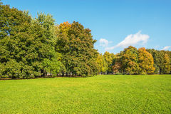 Trees on the meadow. Royalty Free Stock Photos