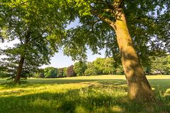Trees and meadow in peaceful park. Trees and grass meadow in a peaceful park in summer stock image