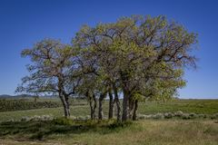 Trees in the Meadow stock photo