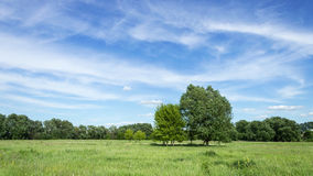 Trees in the meadow. Trees on the meadow. Several trees in the middle ground, and a lot of trees in the background. And the sky with beautiful clouds royalty free stock image