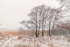 Trees on a meadow with snow Stock Image