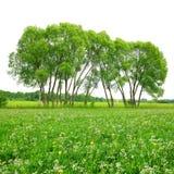 Trees on meadow Stock Photos