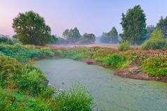 Trees on meadow and swamp full of duckweeds. Morni Royalty Free Stock Images