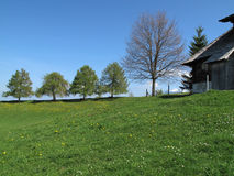 Trees and meadows. In springtime near Aeschiried royalty free stock image
