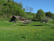 Trees and meadows. In springtime at the foot of Niesen summit royalty free stock photography