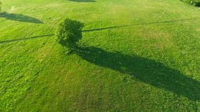 Trees in the meadows aerial view. Trees in the green meadows aerial view stock video footage