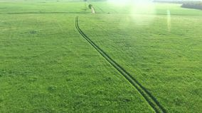 Trees in the meadows aerial view. Trees in the green meadows aerial view stock footage