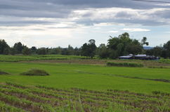 Trees and meadows. Within rural,thailand Stock Photo