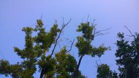 Trees med blåttskyen Arkivfoto