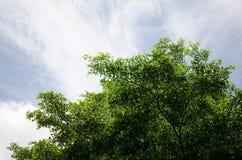 Trees med skyen Royaltyfria Foton