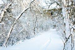 Trees med snow Arkivfoto