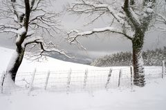 Trees med snow Arkivfoton