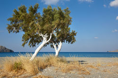 Trees and Mediterranean sea at sunrise in Plakias. Crete. Greece Stock Photography
