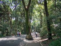 Trees at Meiji Jingū Srine, Tokyo, Japan royalty free stock photos