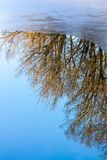 Reflections, trees and ice Stock Image