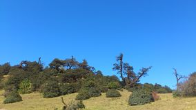 Trees on the 3000 metres mountain. A magnificent nature scenery on the 3000 metres mountain lacated in Dali, Yunnan, China Royalty Free Stock Photos