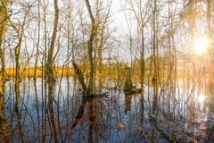 Trees In The Middle Of Body Of Water Royalty Free Stock Photos