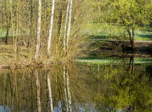 Trees mirrored in a lake Royalty Free Stock Image
