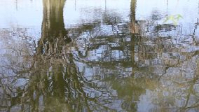 Trees mirrored on the lake. And water vibration stock video footage