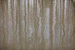 Trees mirrored on rippled water Royalty Free Stock Images