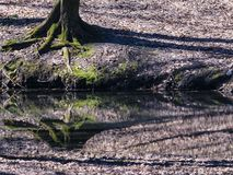 Trees mirrored on rippled water surface royalty free stock photos