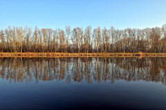 Trees mirroring in calm river. Leafless trees mirroring in calm waters of river Elbe Stock Photo