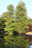 Trees mirroring in a lake royalty free stock photography