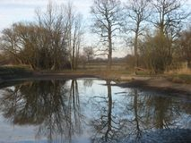 Trees Mirroring in Pond Stock Image