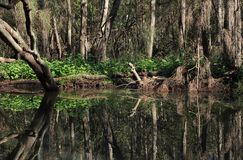 Trees mirroring in a river Royalty Free Stock Photos