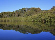 Trees mirroring in the Wrights Creek Royalty Free Stock Images