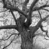 Trees. In misawa japan aomori Royalty Free Stock Photo