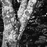Trees. In misawa japan aomori Royalty Free Stock Photography