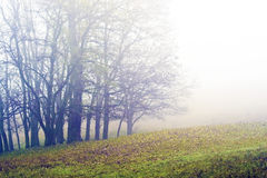 Trees in the Mist Royalty Free Stock Images
