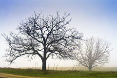 Trees in the Mist Royalty Free Stock Photography
