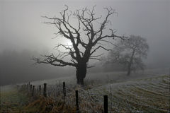 Trees in the mist Stock Images