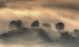 Trees in the mist. Stock Photography