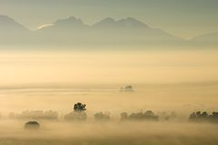 Trees in mist Stock Photo