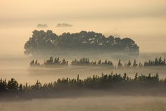 Trees in mist Stock Photography