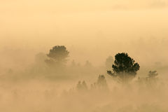 Trees in mist. Early morning royalty free stock photo