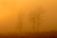 Trees in mist. Early morning royalty free stock photography