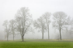 Trees in mist. Trees along a small country road in the autumn mist Stock Images