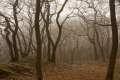 Trees in the Mist Stock Photography