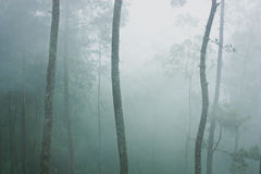 Trees and mist in forest Royalty Free Stock Photography