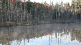 Trees and mist on the lake. Dead trees before forest and the mist on the lake in Algonquin Park Canada stock footage