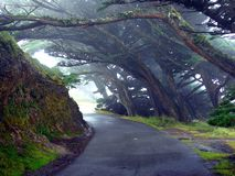 Trees Mist Lane Royalty Free Stock Photo
