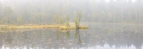 Trees in mist Stock Image