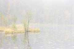 Trees in mist Royalty Free Stock Image