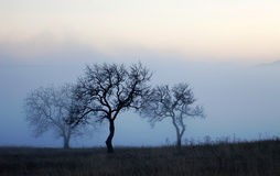 Trees on misty autumn day Royalty Free Stock Photo